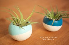 bird and feather air plants in dip-dyed containers