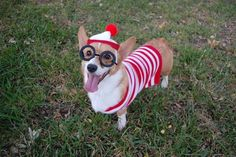 Frighteningly Cute Halloween Pet Costumes 2 - https://www.facebook.com/diplyofficial
