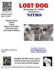 "#Lostdog 5-13-14 #Weyauwega #WI #SiberianHusky Female ""Nitro"" Black/White Hwy 49 & Hwy A 920-427-0432 https://m.facebook.com/story.php?story_fbid=767045563326792&id=354914621206557"