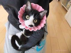 里親さんブログガールちゃんの幸せ通信 - http://iyaiya.jp/cat/archives/76297