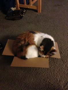 Like, really not the perfect fit.   The Search For Love, As Told By Cats In Boxes