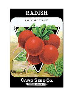 Vintage radish seed