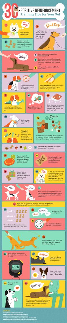 Pet Training - Pupy Training Treats - Positive Reinforcement Training for Dogs-Infographic by Amber Kingsley - How to train a puppy? This article help us to teach our dogs to bite just exactly the things that he needs to bite Pomsky, Scottish Fold, Puppy Care, Pet Care, Positive Reinforcement, Dog Care Tips, Pet Tips, Pet Treats, Weimaraner
