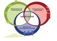 Agroécologie ou permaculture ?