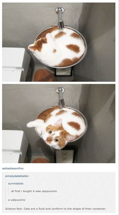 Funny Cat Memes That Will Keep You Laughing - 33