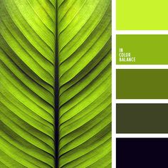 лаймовый, оттенки зеленого, оттенки салатового, оттенки цвета лайма, подбор цвета, салатовый, светло-салатовый, тёмно-зелёный, цветовое решение для дома.