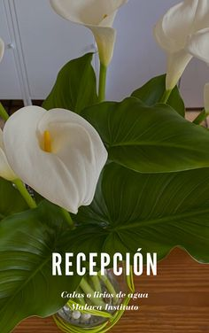 Calas o lirios de agua en la recepción de nuestra residencia Mini Gym, Dance Studio, Restaurant Bar, Swimming Pools, Swiming Pool, Calla Lily, Irises, Calla Lilies, Decks