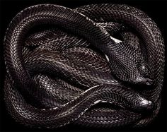 A snake like a coil of night #TSTQ