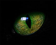 Eye of a black cat.