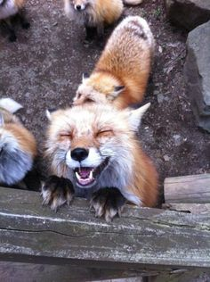 happy fox! Nice :-) Keep smilin