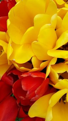 Yellow and red..