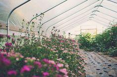 hoophouse flowers