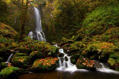 Photo Lower Kentucky Falls by Skyler Hughes on Adventure Bucket List, Adventure Travel, Adventure Time, Oil Pastel Landscape, Oregon Landscape, Oregon Waterfalls, Beautiful Waterfalls, Oregon Coast, Nature Photos