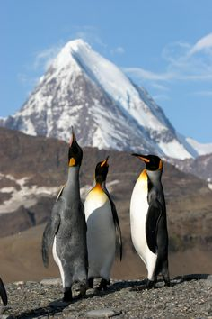 Antarctic Peninsula Photo by Jan Bryde #OceanwideExpeditions #South Georgia