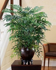Unique Mixed Silk Palm Plant | Artificial Plants by OfficeScapesDirect