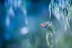 """Green Loves Blue - HBW"" by Levente Bodo on Flickr https://www.flickr.com/photos/42957889@N05/13996848257/in/pool-dof"