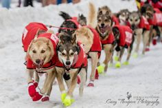 | Casey Thompson Photography - near Anchorage, AK · Ed Stielstra's Team