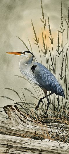 Heron And Cattails by James Williamson - Heron And Cattails Painting - Heron And Cattails Fine Art Prints and Posters for Sale Watercolor Bird, Watercolor Paintings, Blue Heron, Wildlife Art, Beach Art, Bird Art, Beautiful Birds, Pet Birds, Art Images
