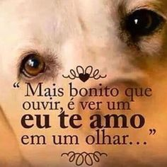 Image in Cris's messages collection by Cris Figueiredo Love Pet, I Love Dogs, My Love, Animals And Pets, Cute Animals, Frases Humor, Dog Quotes, My Animal, Pet Shop