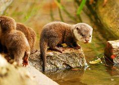 Baby Otter Field Trip