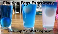Try this simple floating eggs experiment to see how density can make an egg float at different levels. 6th Grade Science, Kindergarten Science, Elementary Science, Teaching Science, Science Activities, Science Ideas, Classroom Activities, Primary Science, Preschool Class