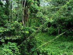 Rainforest, Costa Rica