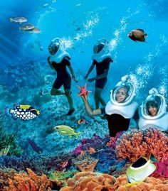 Discovery Cove Orlando... can't wait to take our son here!