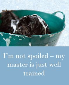 Im not spoiled my master is just well trained. Check out 42 dog quotes. Pug Quotes, Dog Quotes Funny, Funny Animal Memes, Animal Quotes, Funny Animal Pictures, Funny Dogs, Cute Pictures, Funny Animals, Cute Animals