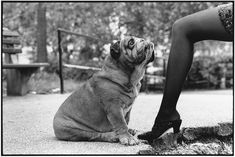 Elliott Erwitt - New York - 1989