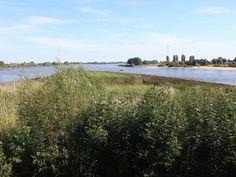 Naturschutzgebiet Auenlandschaft Norderelbe ina Hamburg-Wilhelmsburg