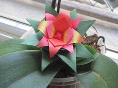 """""""Bromélia"""" (pg 82), dobrada porGraça Borges. http://www.coisasdepapel.com.br/2013/08/livro-origami-em-flor-via-amazon-para-o-mundo/  http://terapiadopapel.blogspot.com.br/2013/06/a-venda-o-livro-origami-em-flor.html"""
