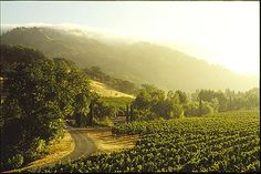 Beautiful wineries in Mendocino County. http://www.visitcalifornia.com/region/discover-north-coast