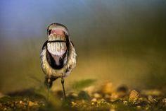 Des oiseaux effrayants avec une bouche et des dents par Sarah DeRemer