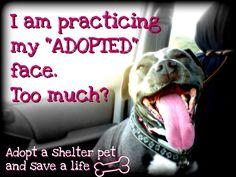 Adopt a shelter dog!!  www.adoptapet.com