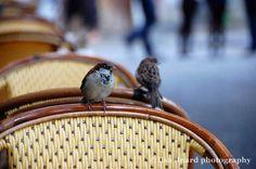 Birds of Paris. (c) Lisa Linard Photography.