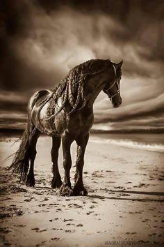. All The Pretty Horses, Beautiful Horses, Animals Beautiful, Beautiful Gorgeous, Absolutely Gorgeous, Black Horses, Wild Horses, Horse Photos, Horse Pictures