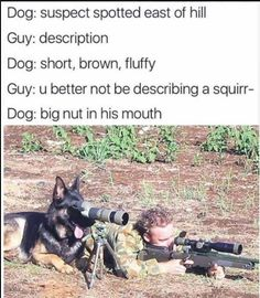 German shepherds are great working dogs, often used by the Police and the Military. But despite their serious appearance, they can also be a lot of fun. Take a look at these 16 funny German shepherd memes and try not to laugh! Funny Animal Pictures, Best Funny Pictures, Funny Animals, Meme Pictures, Baby Animals, Army Humor, Military Humor, Marine Humor, Funny Dog Memes