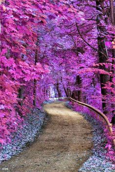 Beautiful purple forest Road to somewhere Nature photography Beautiful World, Beautiful Places, Amazing Places, Beautiful Flowers, Beautiful Roads, Beautiful Forest, Beautiful Scenery, Beautiful Gardens, All Things Purple