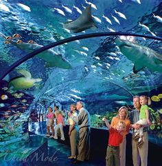 Ripley's Aquarium Of Canada, Toronto, ON. worth going as a local or as a tourist. min. 2 hours needed