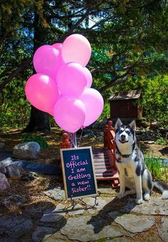 Gender reveal with family dog