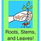 """ROOTS, STEMS, AND LEAVES, FROM A LITTLE SEED!""  Science concepts with a 'beat'!  Learn about what seeds, roots, stems, and leaves do - a list of basic concepts for discussion is provided here.  Then make the learning ACTIVE!  Kids will make Crafts cooperatively and decorate themselves as Plants!  Time to add a SONG and RHYME to set those science concepts to music!  Visit the classroom next door, and bring your camera!  Great to add to your Plant Unit.  (9 pages) Joyful Noises Express TpT! $"
