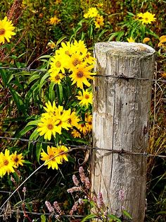 Fencepost Always finding beauty in simple places.