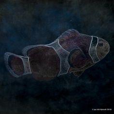 https://flic.kr/p/FksA7Q | nemo - just for the fun of it.. | Found and shot in Atlanterhavsparken aquarium in Ålesund - Norway... Brutalized in Photoshop CC And Topaz Simplify