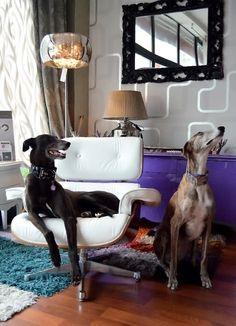 Monday's pets on furniture - desire to inspire - desiretoinspire.net