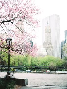 Central Park  CLICK THE PIC and Learn how you can EARN MONEY while still having fun on Pinterest