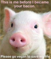 Still think we're meant to eat meat? Tell me what natural carnivore out there would stop and think about how cute this little guy is, just like you're doing now. Stop. Think. Go vegan.