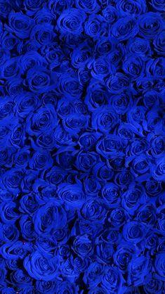 blue roses, iPhone Wallpaper Royal Blue Wallpaper, Blue Roses Wallpaper, Blue Wallpaper Iphone, Flower Phone Wallpaper, Blue Wallpapers, Blue Backgrounds, Royal Blue Background, Iphone Wallpapers, Blue Aesthetic Dark