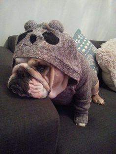 what's better than a bulldog in a panda suit? Baby Puppies, Bulldog Puppies, Cute Puppies, Cute Dogs, Baby Animals, Funny Animals, Cute Animals, I Love Dogs, Puppy Love