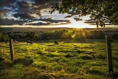 sunset and pasture by Richard Downes - sunset over a field of cows Click on the image to enlarge.