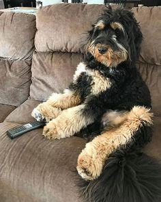 17 Best Cedar Creek Puppies Images Dogs Puppies Puppies